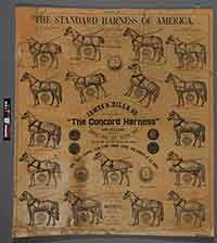 Harness Poster Before Treatment